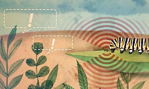 Thực vật có thể cảnh báo cho nhau mối nguy hiểm thông qua việc giải phóng các hợp chất hữu cơ dễ bay hơi vào không khí.