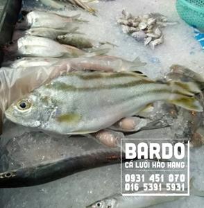 Cá Căn Vừa