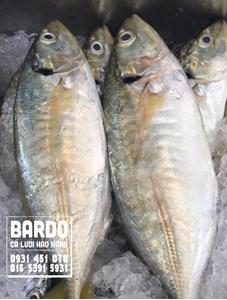 Cá Ngân Vừa