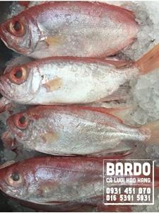 Cá Bã Trầu Vừa